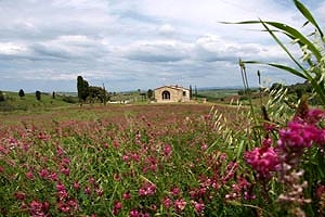Farmhouse Montisi