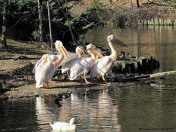Zoo Citt Di Pistoia Lo Zoo Citt Di Pistoia Animali Da